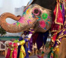 india-tours-jaipur-gangaur-festival-jpg-1340x0_default